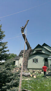 Tree trimming and removal Windsor Region Ontario image 2