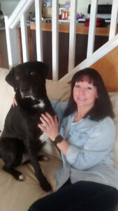 Pet lover looking to walk and care for your fur babies!