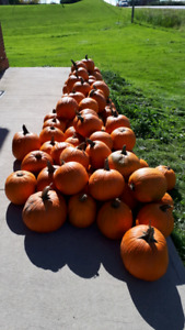 Pumpkins and corn husks for sale small medium and large availabl