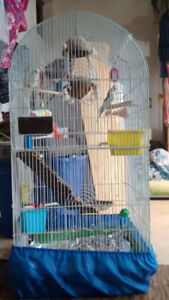 Budgie rehoming