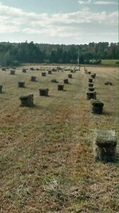 High quality Timothy horse hay for sale