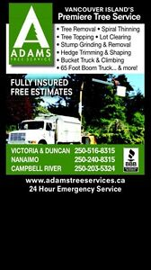 TREE REMOVAL AND HEDGE TRIMMING Comox / Courtenay / Cumberland Comox Valley Area image 1