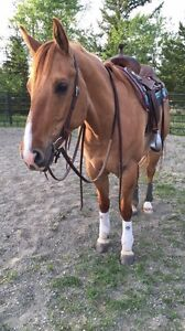 Horse Training & Riding Lessons