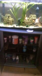 .Selling for $135 or make me an offer... a 35 gal tall fish tank