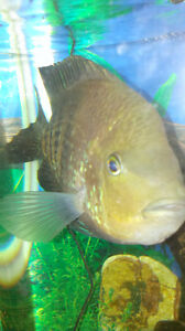 All sorts of fish tank accesories, tanks, fish, filters, heaters