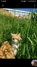 cat stolen east finchly