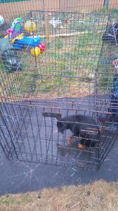 Vendre cage de chien pour chien a la maison