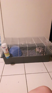 Rat with cage and accessories