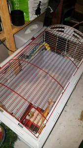 Cage bunny or guinea pig
