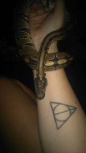Snakes and tank