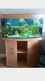 Juwel vision 180L bow fronted fish tank atrium complete setup with lights kids all included