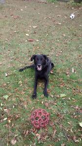 Happy Paw walking service & Pet nanny available