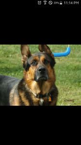 Pet Photography!