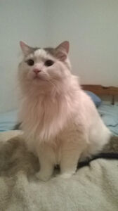 ~ Ally ~ 3 Year Old Female Cat
