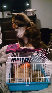 Hamster Cage $15