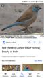 Wanted: Cordon bleu hen