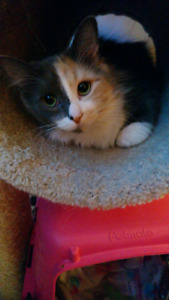 2 playful cuddly female cats