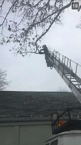 Spring Residential Tree Trimming (home care) Windsor Region Ontario image 5