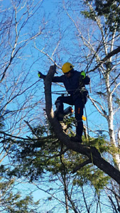 (Fully Insured) Tree Removal & Tree Pruning Services