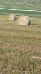 Greenfeed bales  Regina Regina Area image 4