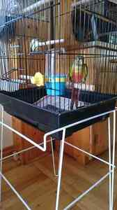 CONURE W/CAGE AND SUPPLIES