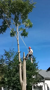 HARRY BROTHERS TREE SERVICE