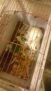Rabbit with cage for sale