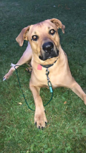 Niagara Dog Rescue - Corky is,Looking for his Perfect Home