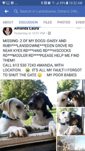 **MISSING*** 2 DOGS** LANSDOWNE AREA SINCE FRIDAY 8PM