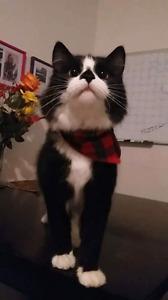 Service de toilettage pour chat et chien à domicile
