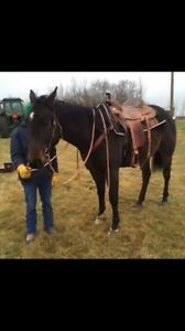 Trade saddle for horse
