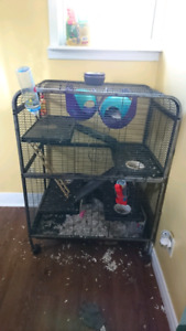 2 male rats-9months old