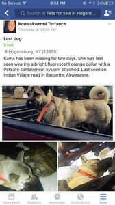 Lost dog on Akwesasne Reservation