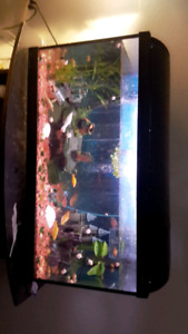 45 gallon fish tank with everything included for 200$