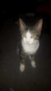 2 male young cats needs homes asap