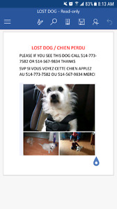 Missing dog/ chien perdu