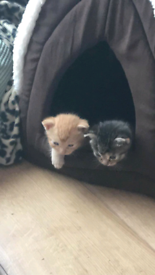 Friendly kittens for sale
