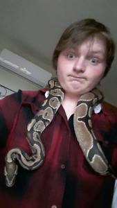 Ball python/w  cage and heat light with 3 rats