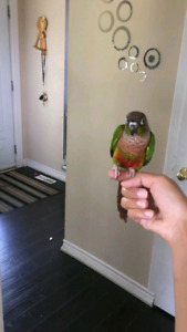Pet bird sitter birds parrot bunny fishes macaw  AVAILABLE