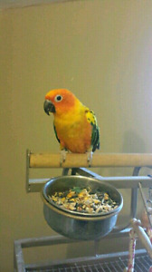 Sun Conure and Everything You Need!