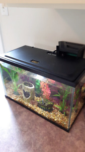 5 gallon fish tank and accessories