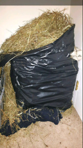 TIMOTHY HAY-GARBAGE BAGS FULL FOR SALE