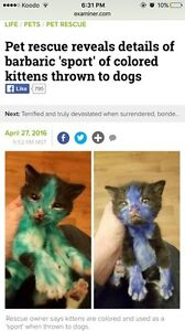 ATTENTION! PLEASE READ. Stop giving away kittens for freee