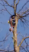 Green Forest tree removal service