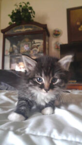 4 kittens looking for their 4 ever homes