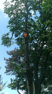 Tree trimming and removal Windsor Region Ontario image 1