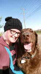 Calgarys HappyPup dogwalking!!! serving many SW areas!! call now