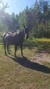 7 year old mare