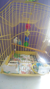 2 month old budgies for sale with cage