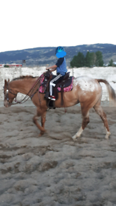 2003 Double registered Appaloosa mare